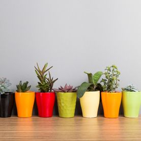 Plants with colourful pots